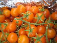 15 graines POTIMARRON ROUGE  SEEDS production France bio potimaron 2 à 3kg