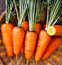 5,000 Carrot Seeds Chantenay Red Core Carrot Garden Starts