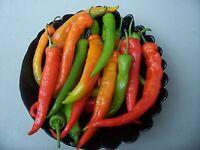Bulgarische Süß Paprika Rogatschi Saatgut 20+ Stück Samen