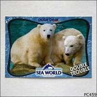 Sea World Gold Coast Australia Polar Bear Shores Postcard (P459)