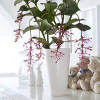 Large Stella White Ceramic Vase by Wikholm, simple elegance at its best. 26cm