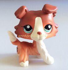 Hasbro Littlest Pet Shop Collection LPS Figure Animals Brown White Collie Dog TN