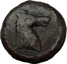 Carthage in Zeugitana 300BC RARE Ancient Greek Coin Horse Palm tree  i53735