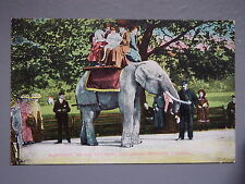 R&L Postcard: Elephant Ride at Zoo Zoological Gardens London, GD&D