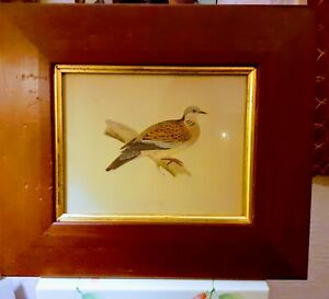 """Fine Art, Birds: Doves:Lithographic  Prints by John Gould. 8.5""""×6.5"""". Set of 3"""