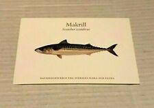 NEW SWEDISH FISH POSTCARD MAKRILL - Atlantic mackerel - Scomber scombrus