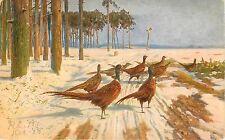 1908 Printed Bird Art Postcard Unposted Pheasants Snowy Road Serie 1052 Europe
