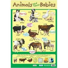 Animals and their Babies Educational Poster (0085)