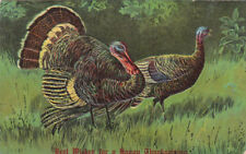 Best Wishes for a Happy Thanksgiving, Male and Female Wild Turkeys, PU-1909