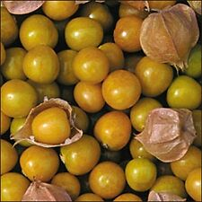 10 Ground Cherry Seeds
