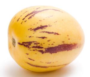 Rarität: 10 Samen Melonenbirne, Pepino (Solanum muricatum), leckeres Naschobst