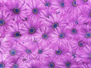 GERBERAS - Cotton woven fabric 100% Cotton Material Sewing Fabric by the Half Me