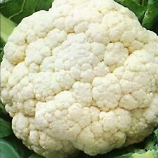 Vegetable Seeds Cabbage Cauliflower Giant of Naples Italian Heirloom NON GMO