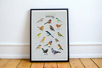 BRITISH GARDEN BIRDS BEAUTIFUL ILLUSTRATED ART PRINT WILDLIFE PICTURE POSTER
