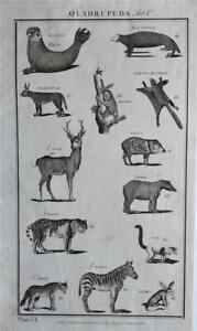 RARE LARGE 1785 ANTIQUE ENGRAVING - QUADRUPEDS - TIGER, ZEBRA, WOLF, STAG, OTTER