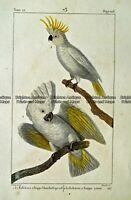 Antique Print 232-021 Sulphur crested cockatoo by Buffon c.1820 Birds