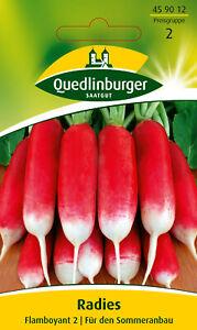 Quedlinburger Saatgut - Radieschen Samen - Flamboyant 2