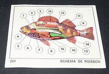 N°224 SCHEMA DE POISSON PANINI 1970 TOUS LES ANIMAUX EDITIONS DE LA TOUR