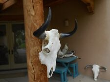 """LARGE 25"""" BULL SKULL W/ POLISHED HORN,LONGHORN,cow STEER,mounted taxidermy"""