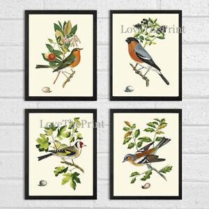 Unframed Bird Print Set of 4 Antique Birds Home Room Decor Illustration Wall Art