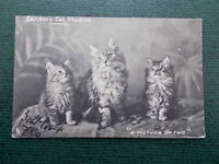VINTAGE 1904 POSTCARD - A MOTHER OF TWO - CATS - KITTENS - LANDORS CAT STUDIES