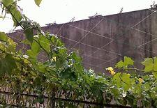 1 Pack Garden13Ft x 328Ft Trellis Netting Plant Support Grow Mesh Net White