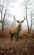 STUNNING SCOTTISH STAG LANDSCAPE #4 WILDLIFE CANVAS PICTURE A1 SIZE WALL ART