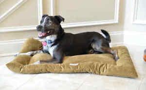 Armarkat Soft Velvet Dog Pet Bed Mat Washable Sage Green LARGE