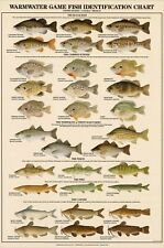 New Warmwater Game Fish Identification Wall Chart Fishing 30 Illustrations 24x36