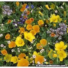 200 Wildflower Southwest mix