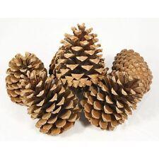 Pine Cones large heavy premium fir cone 14-18cm Box of 10 professional prep