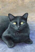 ACEO art print black Cat 621 from original art painting by L.Dumas