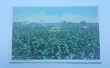 Vtg Postcard Tobacco Fields Cabaiguan Cuba Railroad