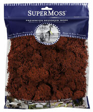 Super Moss Reindeer Moss Red