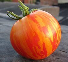 Seeds Rare Tomato Tigrella Early Vegetable Heirloom Organic Russian Ukraine