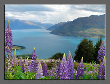 Large Nature Photo Giclee Canvas Gallery Wrap Fine Art Lake Water Lupin Flower