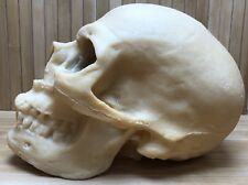 Vintage 1990s Gothic Rubber Latex Human Skull Large Size Novelty Inc Made In Usa