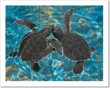 Baby Sea Turtles In Water Art Print Home Decor Wall Art Poster - C