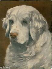 1930 Book Plate Print Dog Painting Clumber Spaniel Sandringham Spark Edward Vii