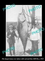 OLD 8x6 HISTORICAL GAME FISHING PHOTO OF WORLD RECORD TUNA CATCH c1913