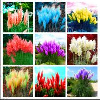 400 PCS Seeds Pampas Grass Colorful Home Garden Bonsai Plants Decorative 2021 G