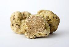 10 g Fresh WHITE TRUFFLE Tuber Magnatum Mushroom Spawn Spores Mycelium Home Grow