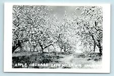Gays Mills, WI - c1950s SMALL TOWN RPPC OF APPLE ORCHARD - J7