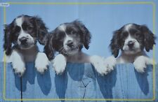 HUNDEWELPEN - A3 Poster (ca. 42 x 28 cm) - Hund Baby Welpe Tier Plakat NEU