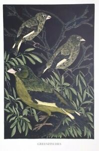GREENFINCH : Old 1948 Hand-coloured Bird, Birds Woodcut / Etching By DAGLISH