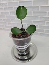 Dischidia Tonsuensis cutting no roots