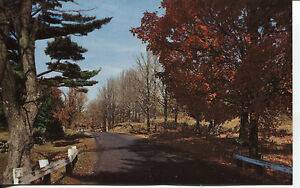 OLD POST CARD THE TRAIL THROUGH THE PARK MINNESOTA ARROWHEAD COUNTRY