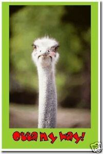 Ostrich - Outta My Way - Funny Animal Print NEW  POSTER
