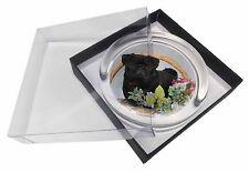 Negro Perro Carlino pisapapeles de cristal en caja regalo Navidad, AD-P95PW