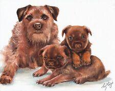 Original Oil Art BORDER TERRIER Portrait Painting PUPPY DOG Signed Artwork